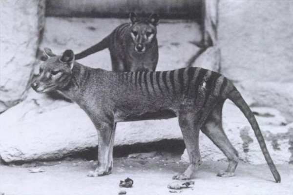 Fotos de Animales Extintos que talvez no conocías