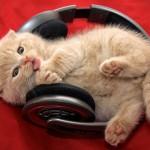 24 sitios para escuchar música en línea