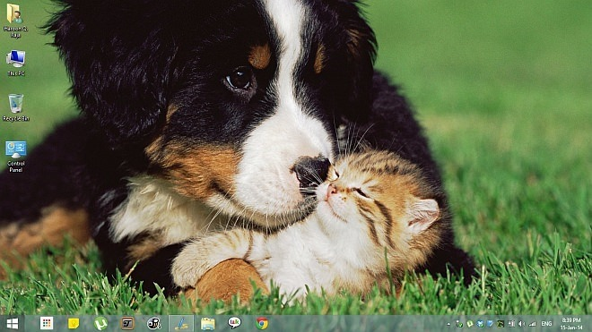 Animal Affection Theme for Windows 8.1
