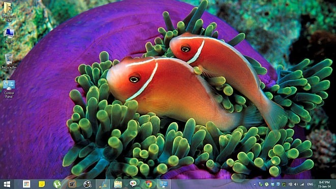 Tropical Fish Theme for Windows 8.1